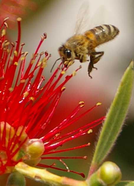 busybee2.jpg