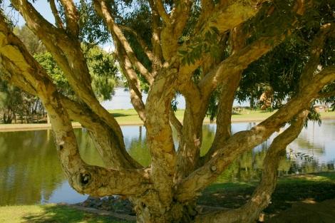 twistyoldtree.jpg