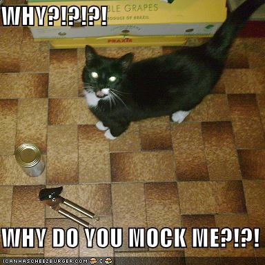 funny-pictures-cat-asks-why-you-are-mocking-him