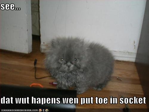 funny-pictures-kitten-has-put-his-toe-in-the-socket1