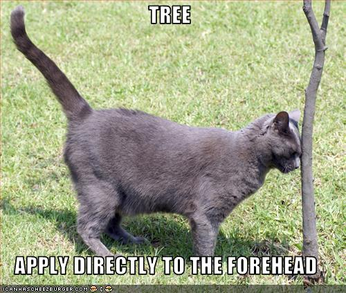 funny-pictures-cat-applies-a-tree-to-his-forehead