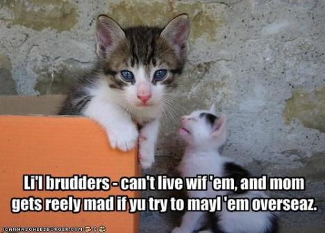 funny-pictures-cat-does-not-want-little-brother1