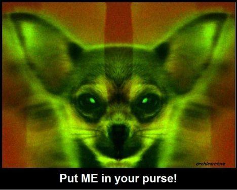 Chihuahua Demon