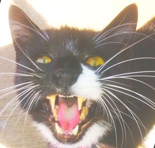 not-so-LOLcat