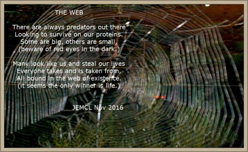 web-of-life